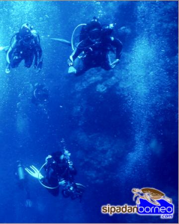 Become a PRO-Diver